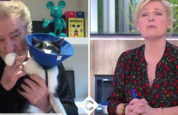 VIDEO Eddy Mitchell confiné avec son chat, le chanteur donne des nouvelles