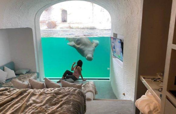 Cet hôtel sous-marin permet de dormir en regardant des ours polaires, des morses et des pingouins pour pas cher