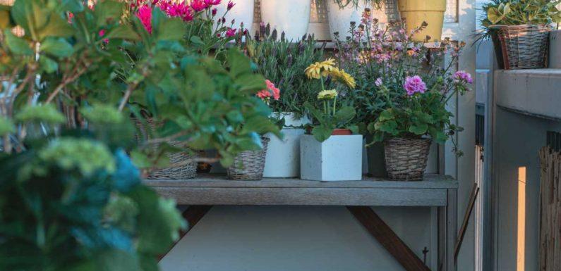 Apprendre à jardiner en ville, c'est possible !