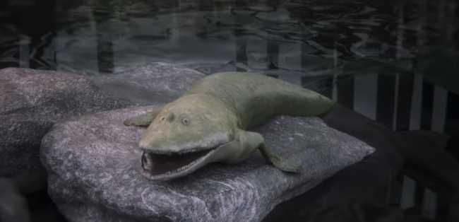 Découverte d'un poisson préhistorique avec des nageoires dotées de doigts