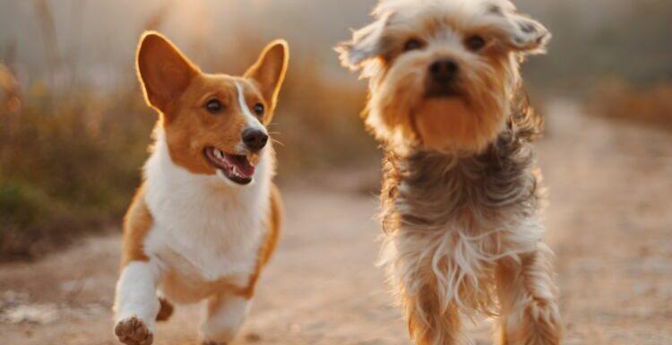 Quelles sont les 10 races de chiens que vous avez le plus de risques de perdre ?