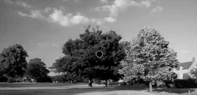 Cette photo en noir et blanc apparaît en couleur grâce à cette illusion d'optique