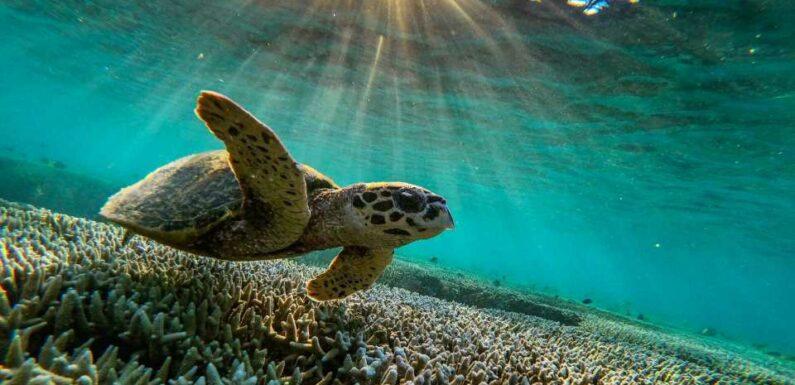 Les actions de WWF pour protéger les tortues marines en Guyane   Vogue Paris