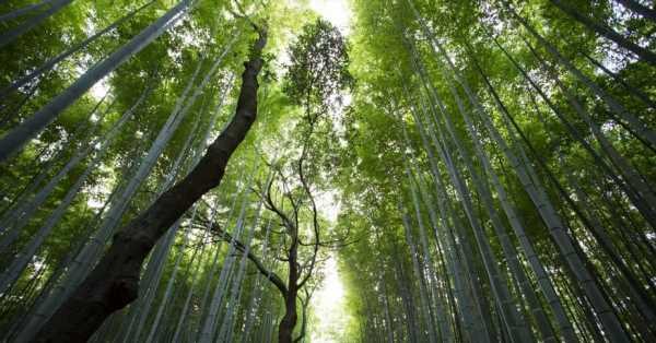 Environnement : Imagine le futur avec l'exposition Renaissances