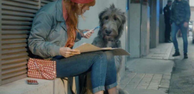 HPI (TF1) : le chien de l'épisode de ce soir a aussi joué pour un grand réalisateur hollywoodien !