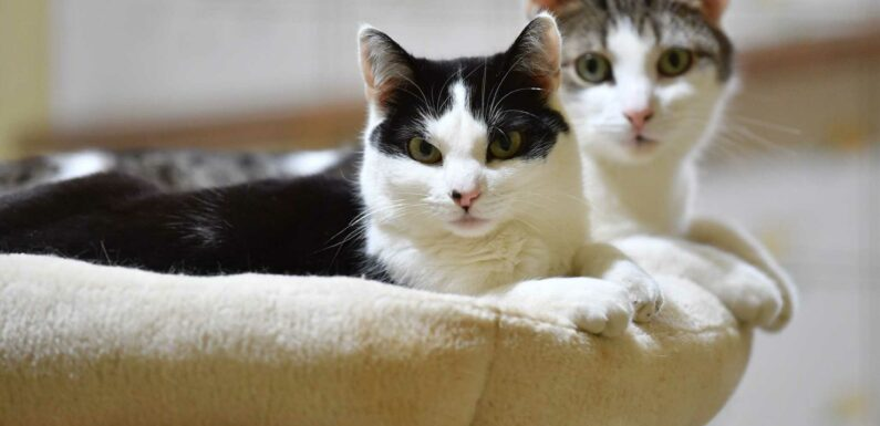 """Selon cette étude japonaise, les chats seraient """"inaptes socialement"""" pour rester aux côtés de leur maître"""
