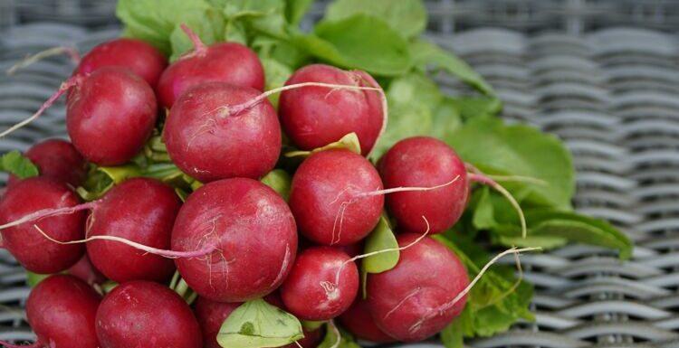 5 idées recettes avec des radis