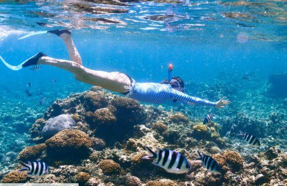 C'est quoi une crème solaire plus respectueuse des coraux ?