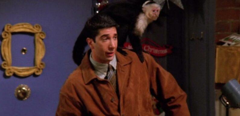 Friends : David Schwimmer détesté au plus haut point par l'entraîneur de Marcel le singe ?