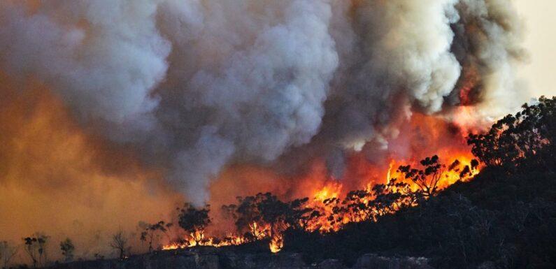 Incendies dans le Var : 900 pompiers mobilisés, des milliers de personnes évacuées, 4000 hectares détruits… Retour sur les événements