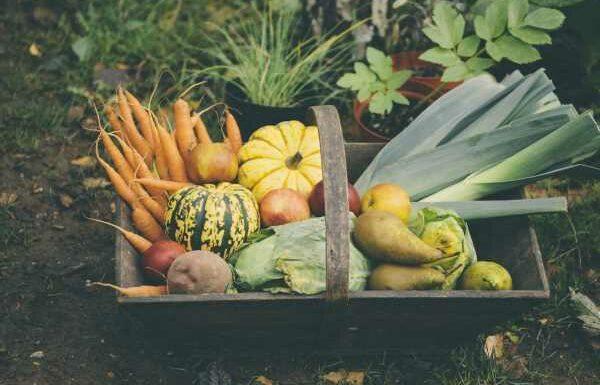 Fruits, légumes, fromages, poissons… Quels sont les produits de saison à savourer en automne?